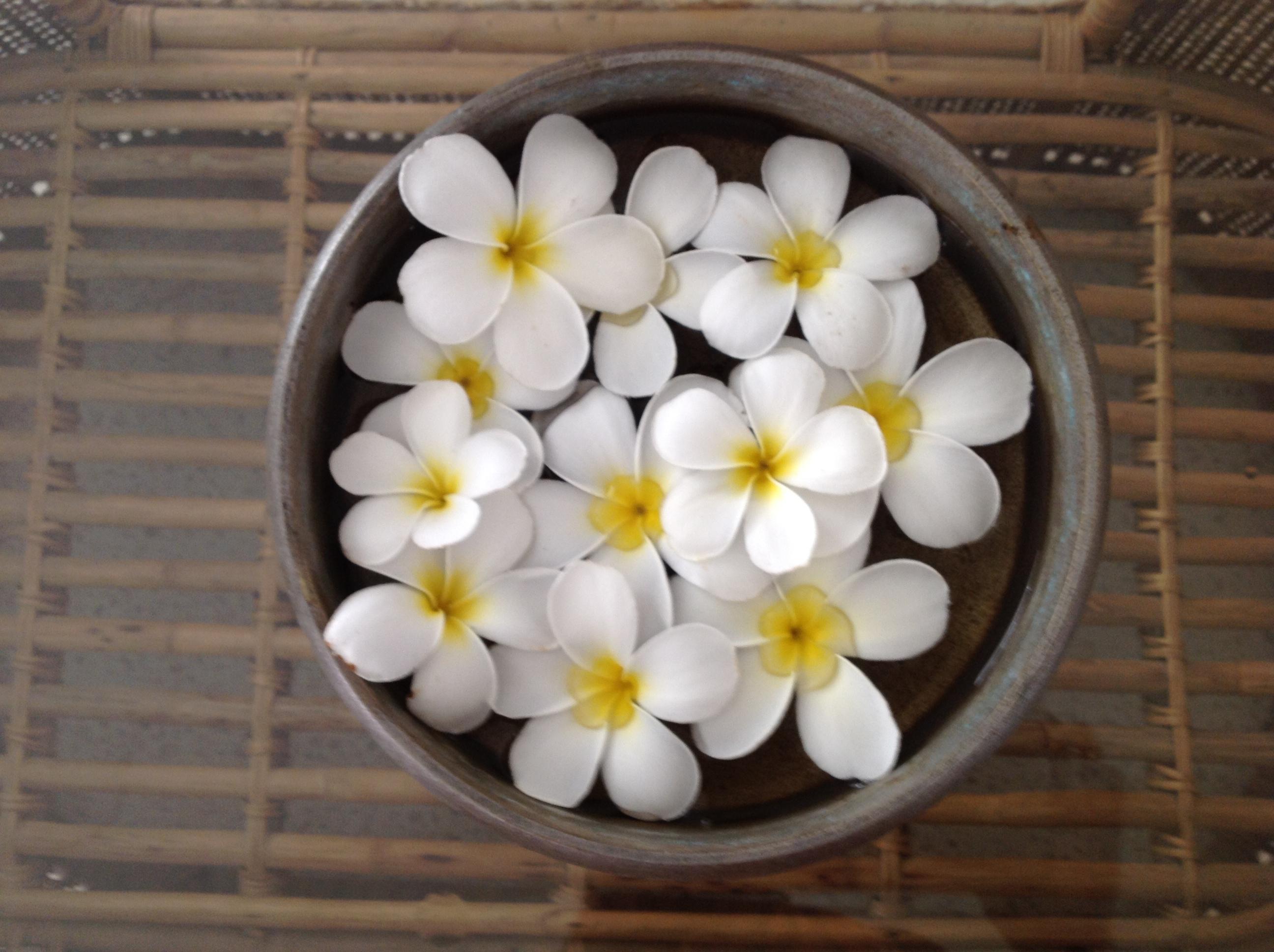 Jaipurs flowering shrubswhats blooming at savista savista champa floating champa flowers izmirmasajfo